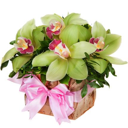 Коробочка с зелеными орхидеями